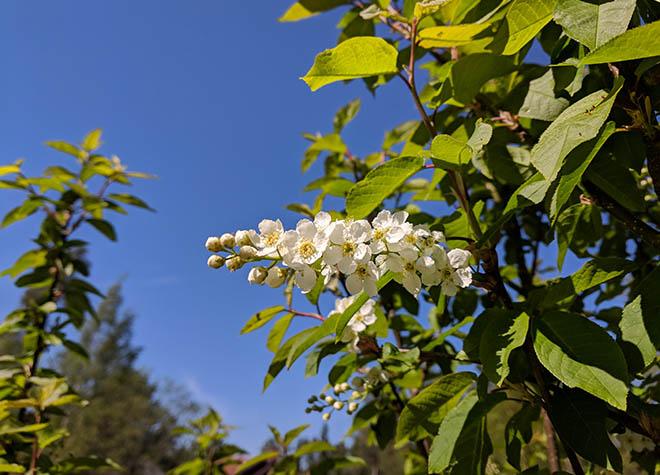 blomma-660-7-IMG_20180521_141205